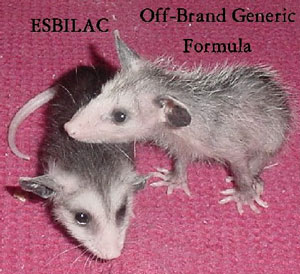 Opossum Care Infant