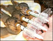 Baby Triple Squirrel Feeder